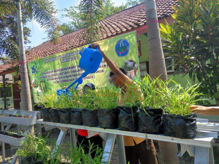 Polije Beri Pelatihan Budidaya Sayuran Organik untuk Anak Berkebutuhan Khusus
